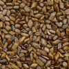 graines de cassia