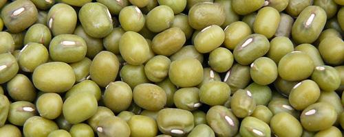 Graines de haricot vert (lu dou) – 綠 豆