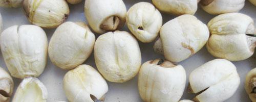 Graine de Lotus (lian zi) – 蓮 子