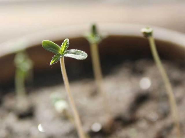 seedlings-turning-towards-light