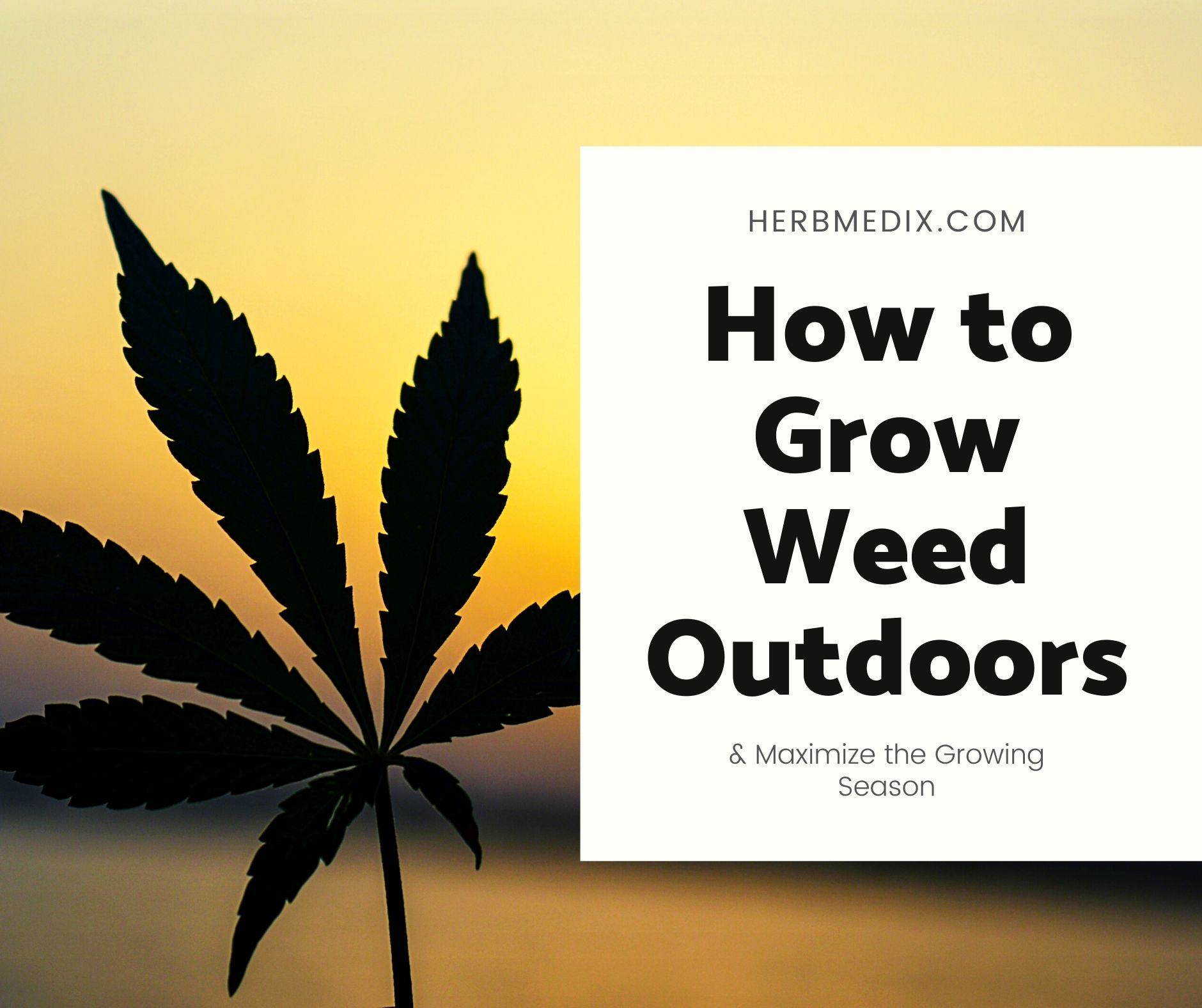How to grow weed outdoors maximize growing season