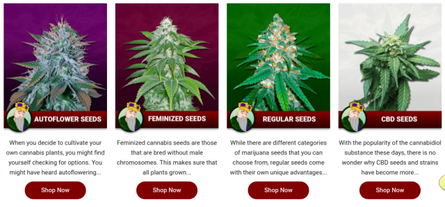 crop-king-seeds-seed-bank-review-choosing-the-right-strain