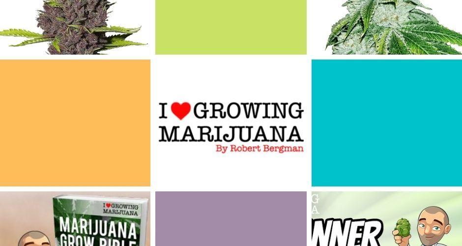 ilgm i love growing marijuana full review