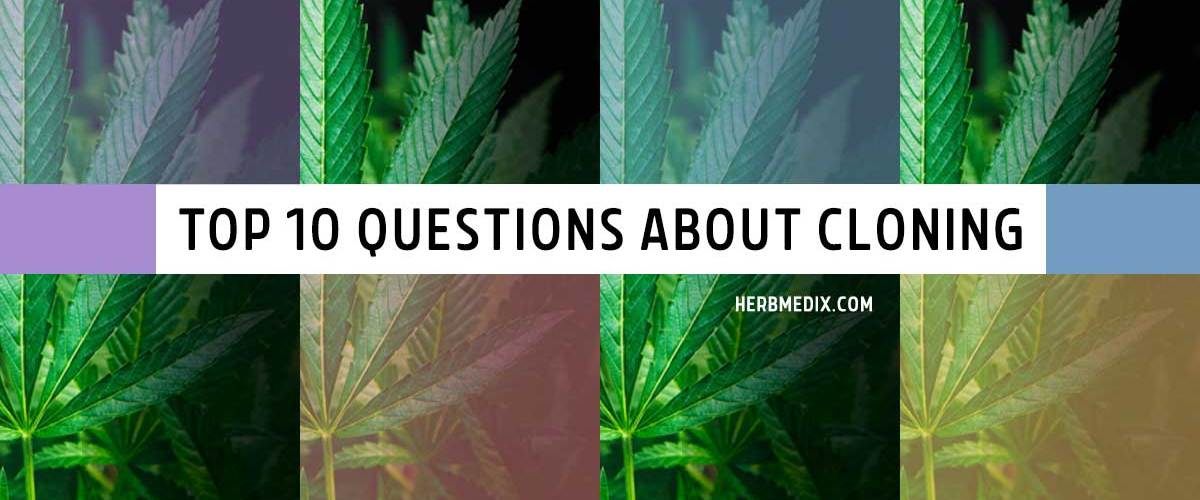 Top-10-questions-about-cloning