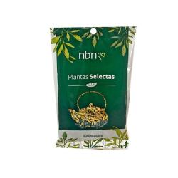 olivo planta