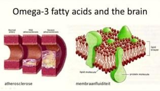 Puberbrein fatty acids