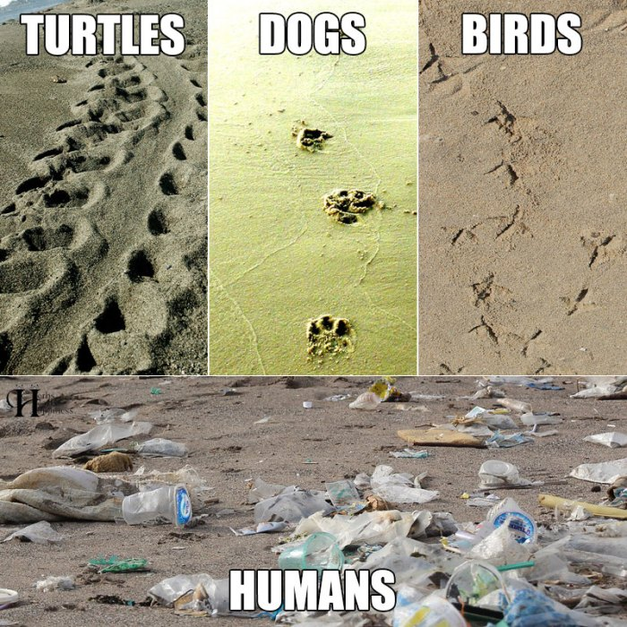 Animal Human Sand Footprints