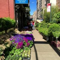 New York City's Flower District: Green Oasis In A Concrete Jungle