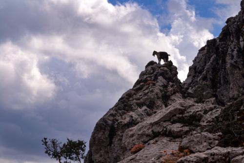Cretan goat