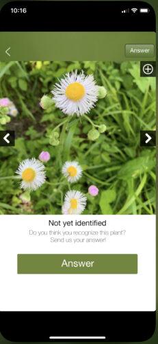 Plantifier plant identification app