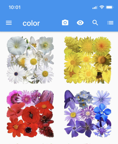 What's That Flower app