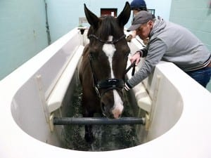 Valegro on water treadmill at Hartpury Equine Therapy Centre