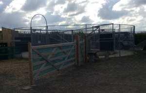 Jessica Kingston-Schleider livery yard horse walker