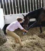 Strides Veterinary Physiotherapy Shropshire