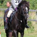 Lovely 13.3 Welsh PC pony