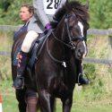 Lovely 13.3 Welsh PC pony