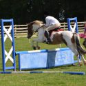 13.2hh pony with huge potential for lwvtb