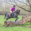 13 year old welsh section C  dark bay gelding 13.2h hunting pony for sale. £2000