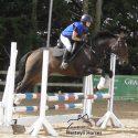 Stunning dressage/ showjumping mare!
