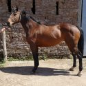 Kind, sound mare ideal ROR project