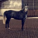 Competition Quality Mare