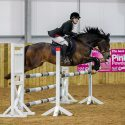 Super 14hh jumping pony for sale