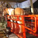 Equine Treadmill for sale