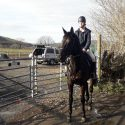 Dark brown gelding for sales