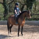 13HH WHP HOYS JUMPING OR DRESSAGE POTENTIAL by Bernwode Brocket