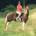 Stunning Coloured Mare For Sale