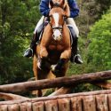 Full up 14. 2 gelding for loan/share at present home