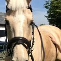 Groom/Rider Required For Small Private Yard-Competing Ops-HGV Bonus+Own Horse
