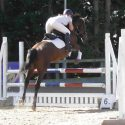 Competitive showjumping mare!