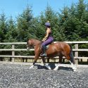 Brynithon Tulisa - 13.2hh 5 year old bay mare.