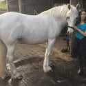 Semi Retired Equine Best Friend Wanted