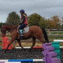 Gorgeous 15.2 Ex Racehorse For Sale