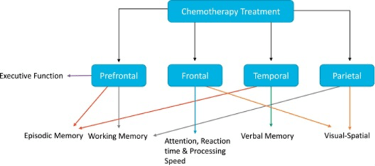 chart showing affected brain regions from treatment