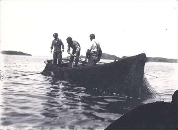 Image result for hauling cod fish picture