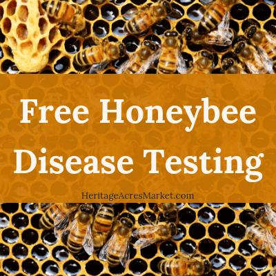 Free Honeybee Disease Testing 1