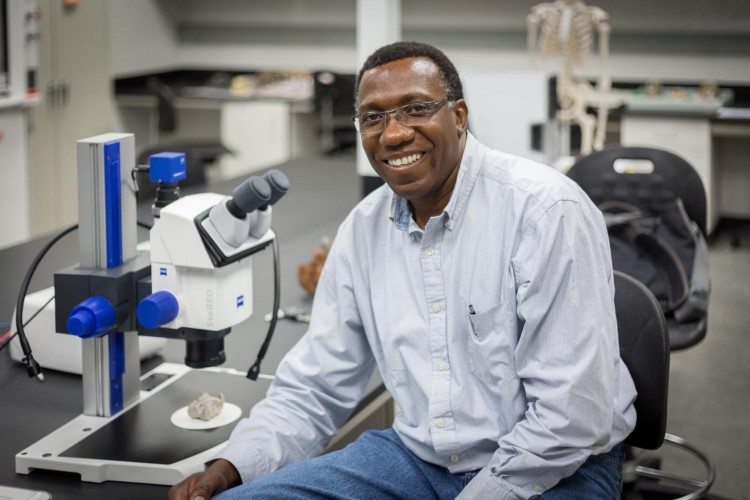 CU Denver Anthropologist Charles Musiba in the lab examining bone fragments. Musiba was part of a team that recently discovered a new species of hominin in South Africa. CREDIT: Matthew Kasakavitch