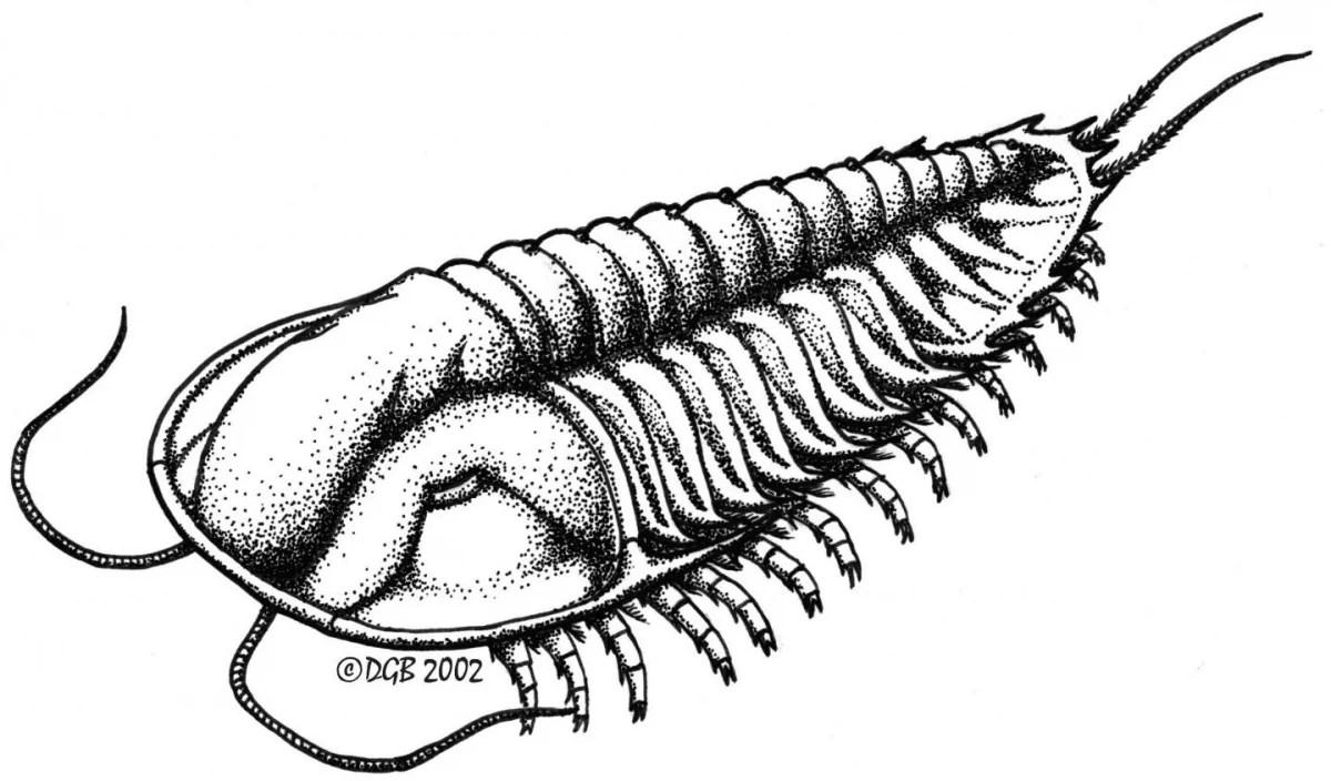 Fossils Find Reveal Unseen Footprint Maker