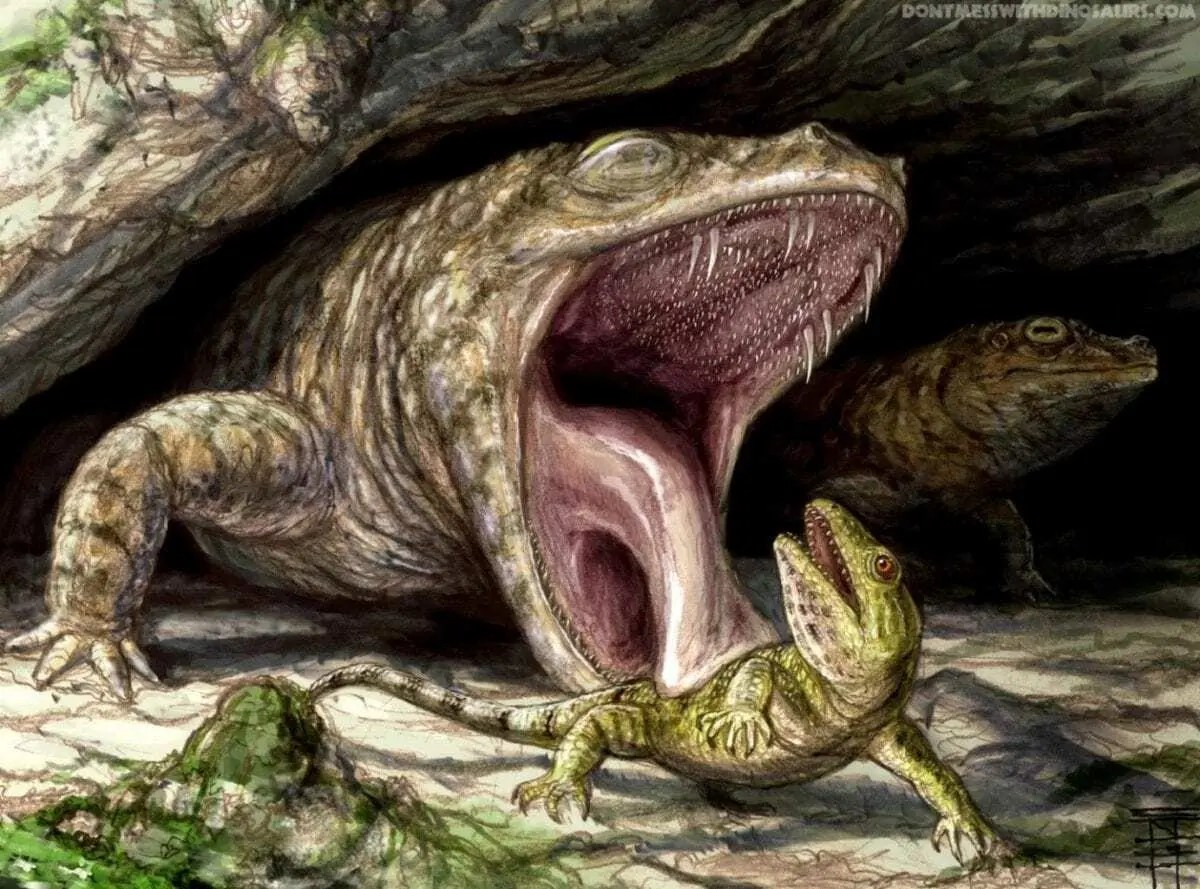 Ancient Amphibian Had Mouthful Of Teeth Ready To Grab You