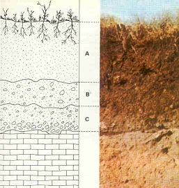 A new level was formed every 12 inches. A new horizon is formed as the soil changed. Credit: http://en.wikipedia.org/wiki/File:Estructura-suelo.jpg#filelinks