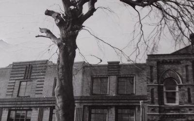 Pruning Tree in Broad St