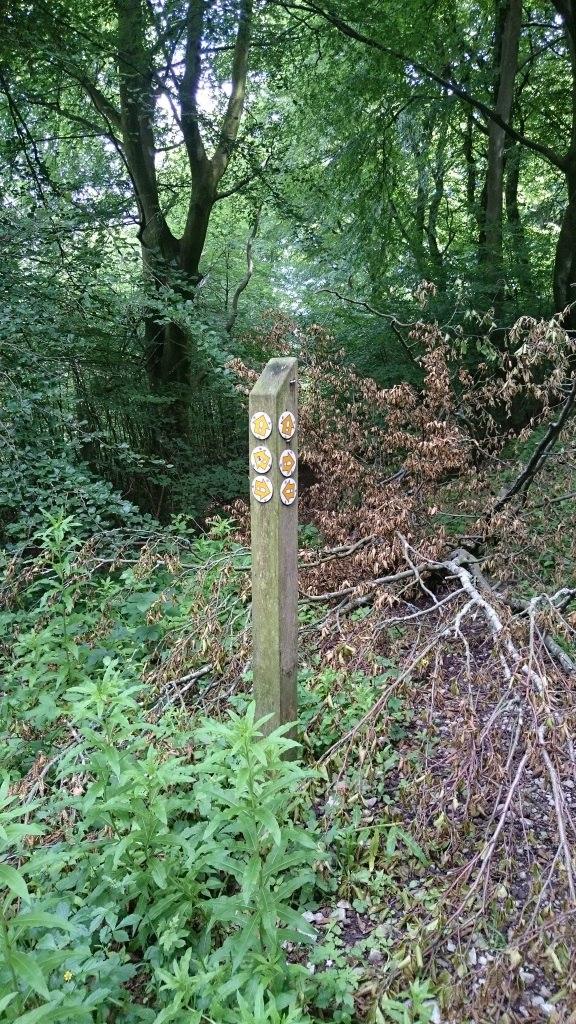 woodlandtrack4