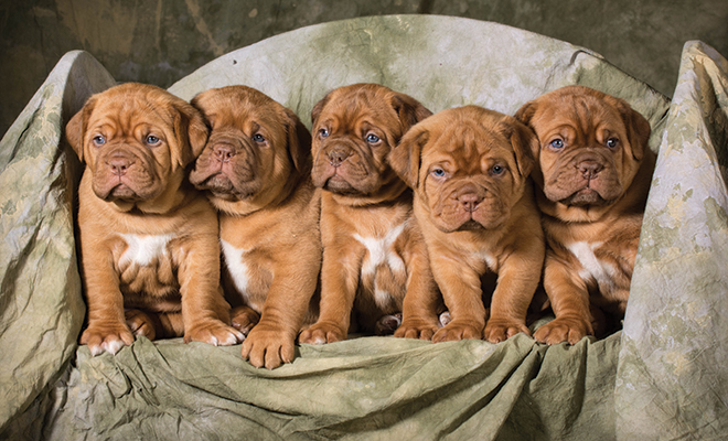 Litter Training Puppies Modern Solutions For Modern Dog Moms Herlife Magazine