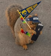 In Depth with our Loyal Son, The ND Squirrel