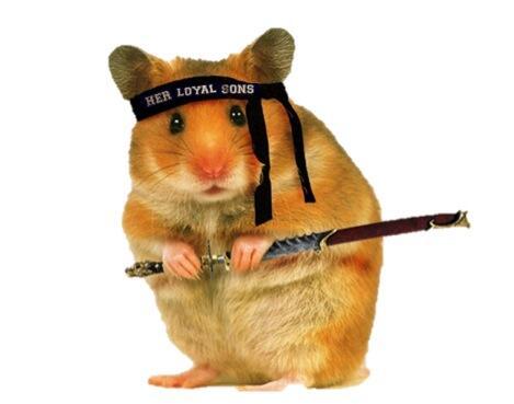 HLS Hamster