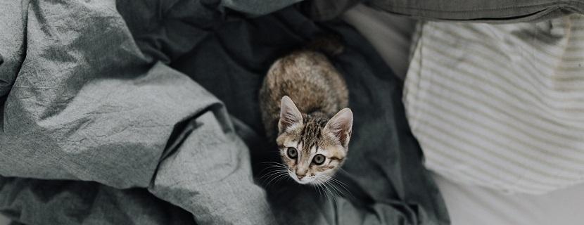 Katze Kastrieren Wie Viel Kostet Das Heroldat