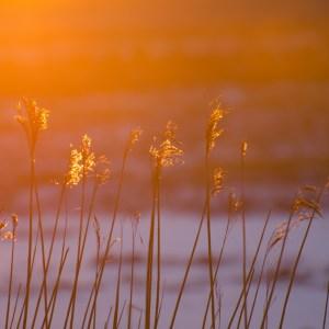 Winter light on marsh grass